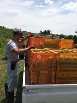 収穫SP.JPG