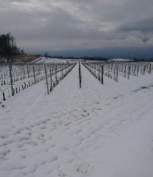 3.21雪.jpg